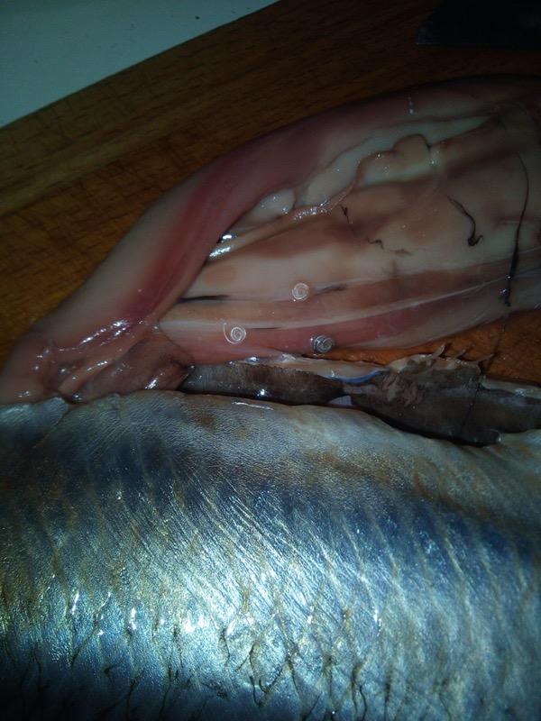 В одном из магазинов Уфы продавали рыбу с червями