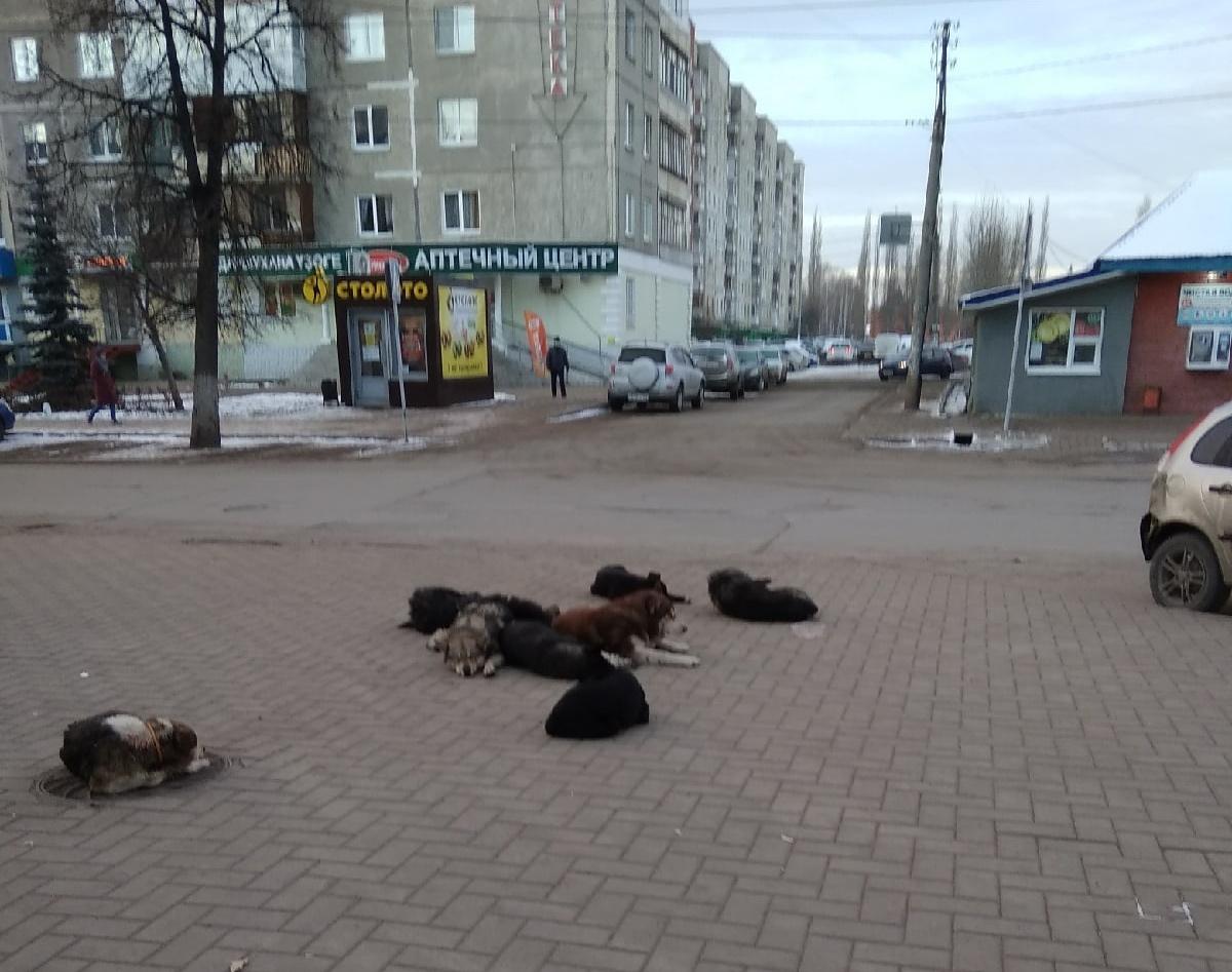 Жительница Уфы оказалась в шоке от ситуации с собаками на центральных улицах